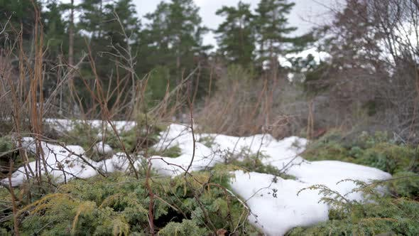 Cover Image for Bushes in Snowy Forest Floor