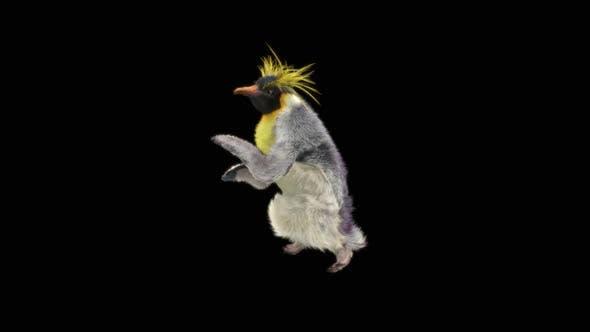 Thumbnail for Penguin Dancing HD