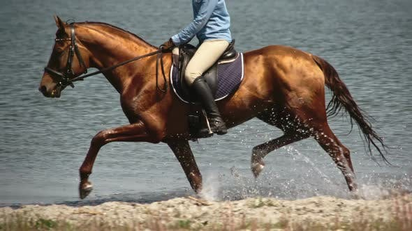 Mounted Mare Trotting on Water