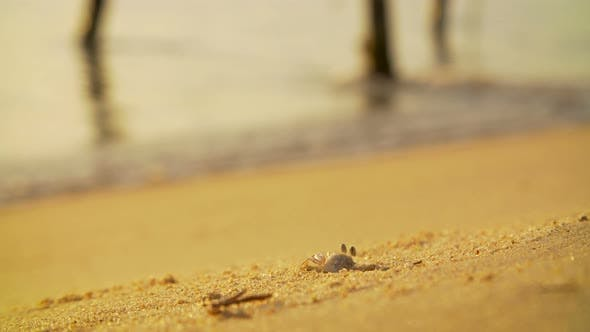 Thumbnail for Crab at Work Digging on a Sandy Beach