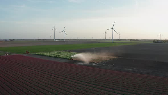 Aerial View of Tulip Planted Fields in the Dronten Area. Spring in the Netherlands