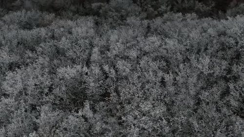 The Top View of the Wild Forest Covered By Hoar