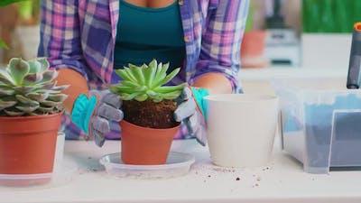 Woman Replanting Flowerhouse