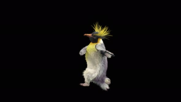Penguin Dancing 4K