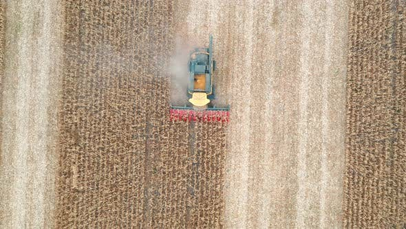 Thumbnail for Aerial Shot of Combine Gathering Corn Crop. Flying Over Harvester Slowly Riding Through Field