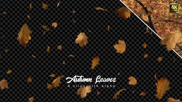 Thumbnail for Leaves Falling | Autumn Season