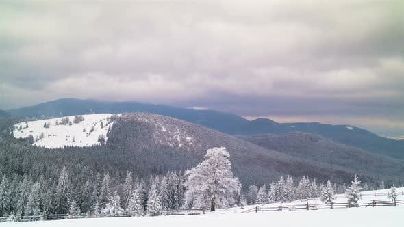 The Winter Mountain Forest