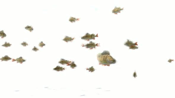 Thumbnail for Fishes Stop Motion