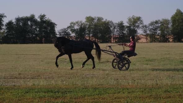 Jockey Practising for Harness Racing