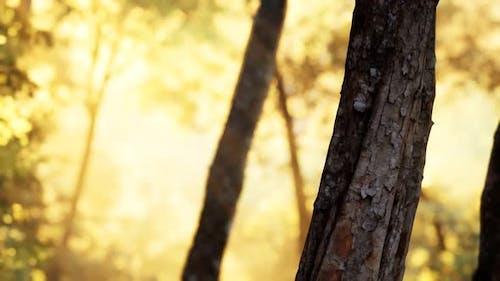 Rayons de soleil éclatant dans une forêt brumeuse