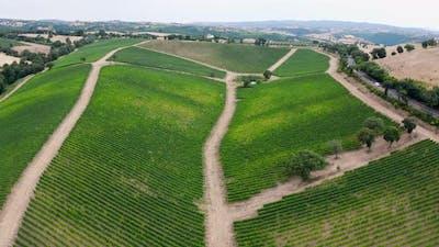 Aerial view of tuscany vineyard