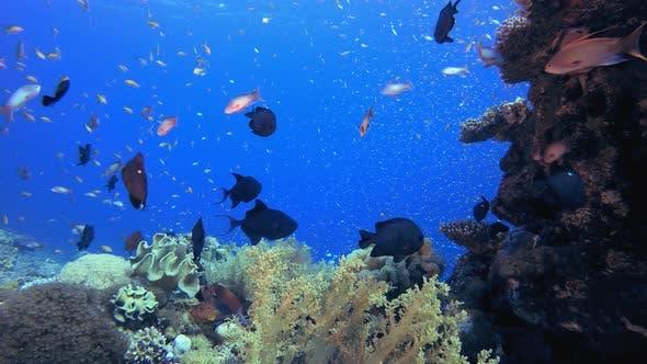 Unterwasser-Schöner Korallenfischgarten