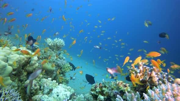 Thumbnail for Fish Reefs Seascape