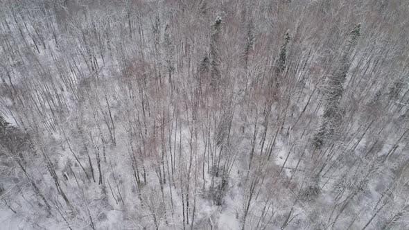 Winterlandschaft mit Wald
