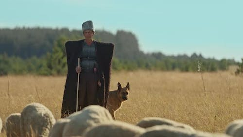Mountain Shepherd in a Cloak and with a Dog Inspects the Flock Walking the Flocks of Sheep