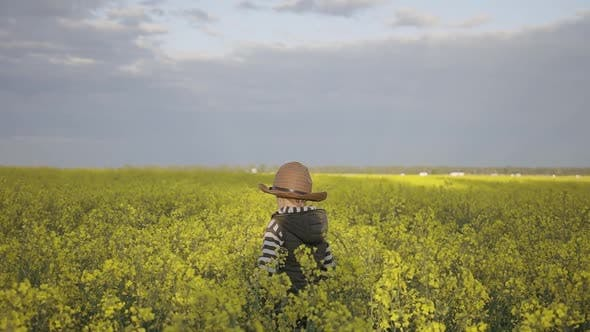 Cover Image for Boy Is Going Through Yellow Field of Rapeseed