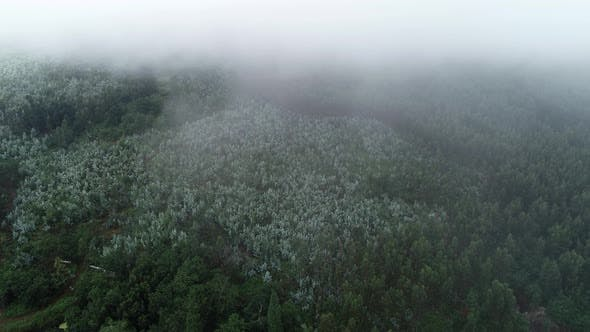 Thumbnail for Flying Over Foggy Forest