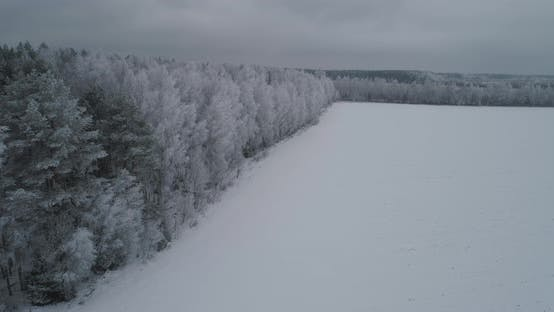 Winter Landscape Forest Field