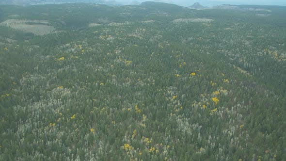 Thumbnail for Aerial view of a forest