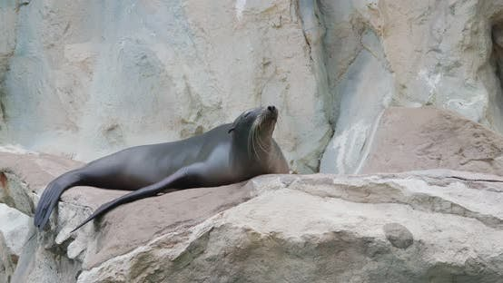 Sea lion on the rock
