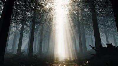 Deep In The Rainforest 02 4K