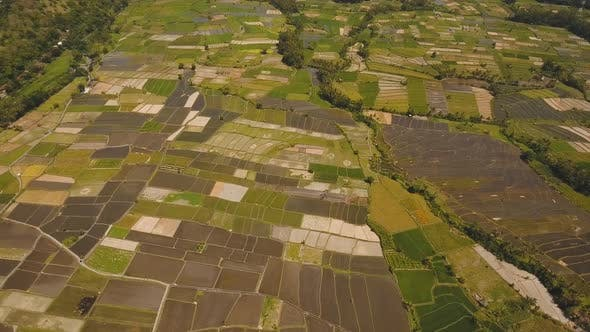 Thumbnail for Landscape with Farmlands and Rice Terrace Field Bali, Indonesia