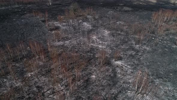 Burned Forest, Destroyed Spring Trees