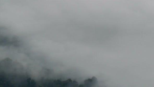 Nebel über Wald