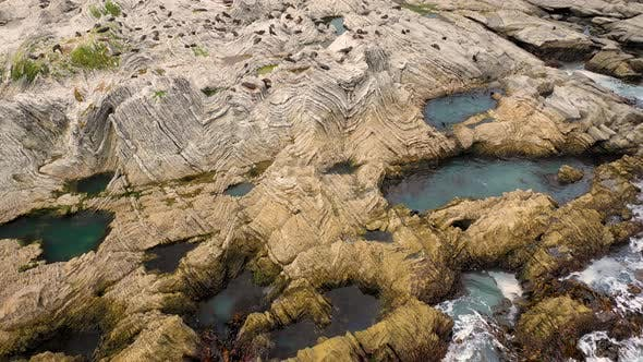 Aerial view of group of Seals at Kaikoura Colony, Canterbury, New Zealand.