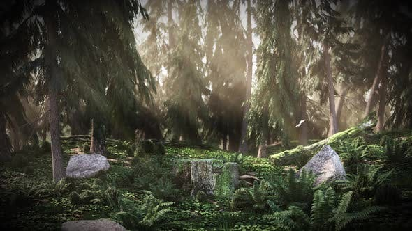 Thumbnail for Cg Dawn in the Forest