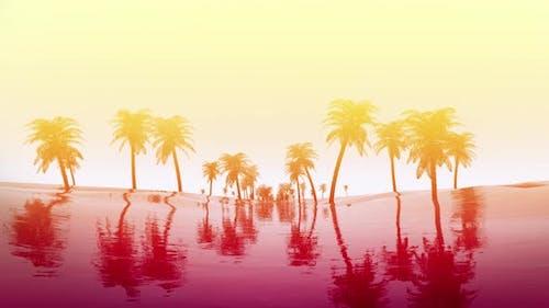 Palm Tree Sunrise 4K