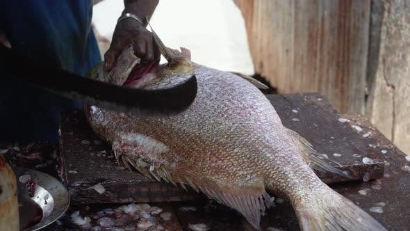 Thumbnail for Man Cleans Fish on a Wooden Table. A Man Cuts off the Fins of a Fish With a Large Knife