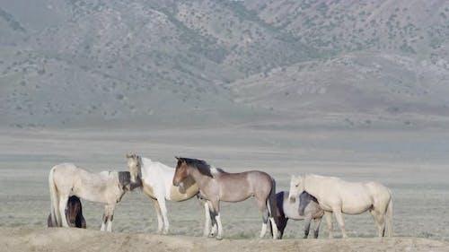 Group of wild horses standing near waterhole