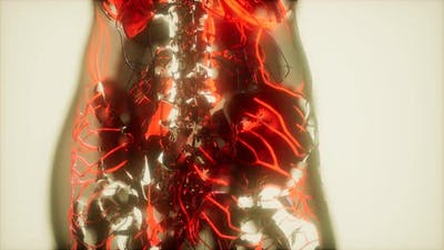 Inspection of Blood in the Blood Vessels of the Circulatory System