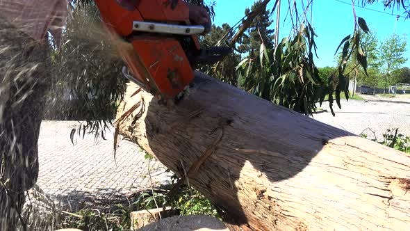 Thumbnail for Cutting Wood