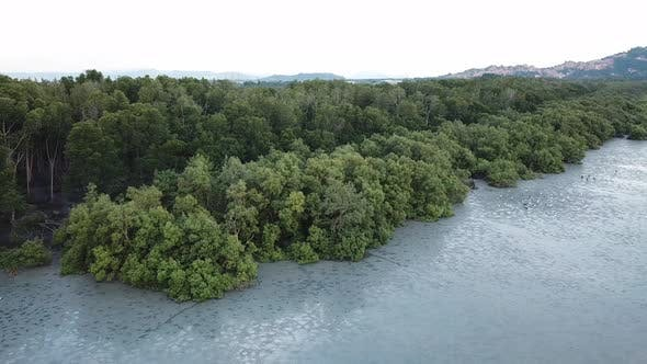 Aerial view mangrove forest with egret birds during low tide at Penang.