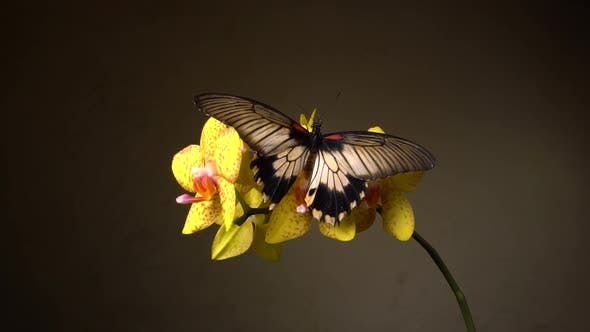 Thumbnail for Butterfly on a Flower