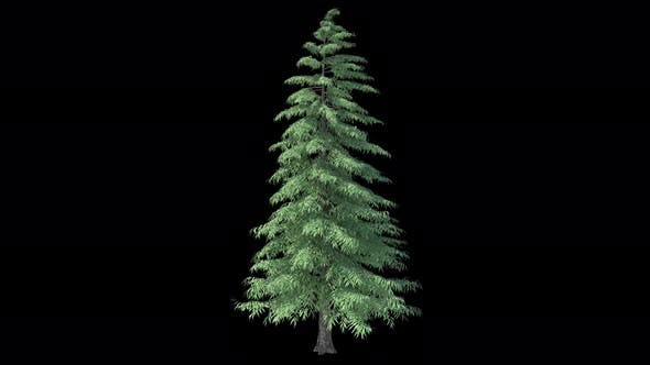 Thumbnail for Weihnachtsbaum wächst mit Alphakanal 4k