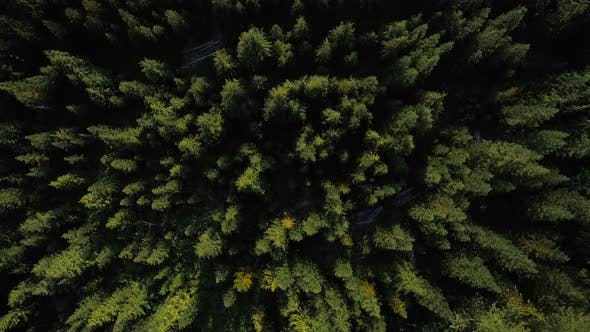 Cover Image for Topview Over Forest Trees And Rural Dirt Road