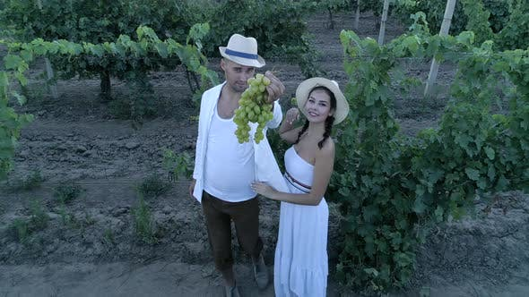 Thumbnail for Harvesting, Drone View on Couple with Ripe Grapes Looks on Camera and Smiles at Countryside