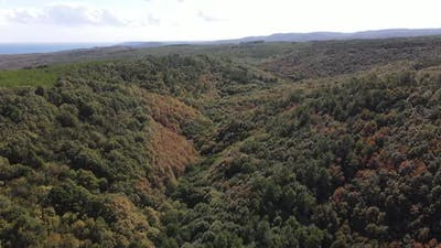 Aerial Drone Forest
