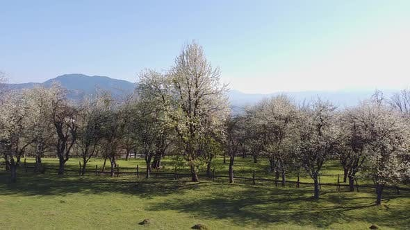 Thumbnail for Aerial Shot Of Vegetation And Trees In The Spring V5