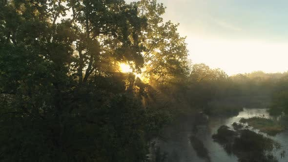 Thumbnail for Sun Beams Shining Through Tree Branches at Sunrise