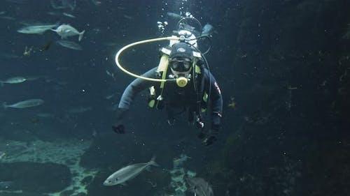 Scuba Diver In Wet Suit In Aquarium