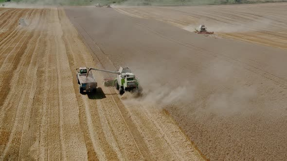Thumbnail for Aerial Drone Top View Harvesting Machine Cutting Down Ripe Wheat Crop Ready To Be Transported and