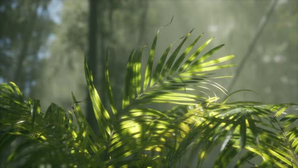 Bright Light Shining Through the Humid Misty Fog and Jungle Leaves