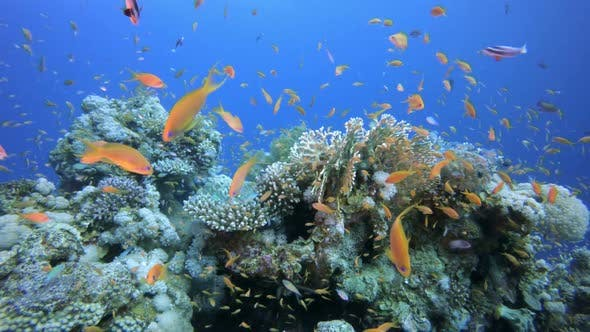 Cover Image for Seascape with Tropical Fish