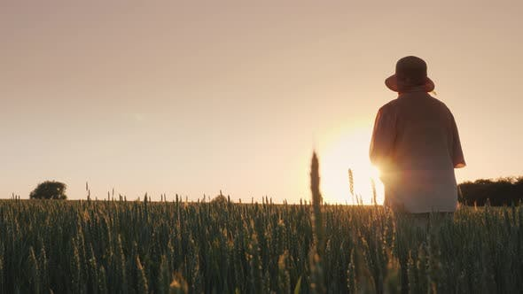 Cover Image for Elderly Woman Admiring the Sunset Over the Wheat Field, Rear View