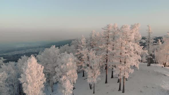 Thumbnail for Drone Flying Over Snow Covered Pine Forest at Sunset