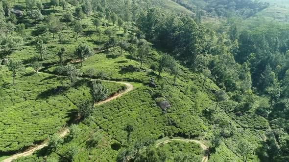 Thumbnail for Flyover Green Tea Landscape